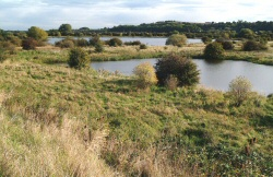 5 GravelPits250 Guided walk around the Netherfield Lagoons