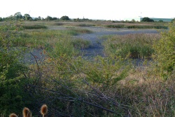 7 DryEndofSlurryLagoon250 Guided walk around the Netherfield Lagoons