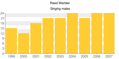 Reed Warblers - Singing males