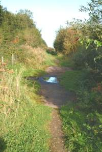 Lower Path, Ford