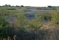 Dry End of Slurry Lagoon