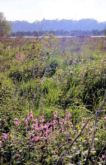 Gravel Pits and Red Campion