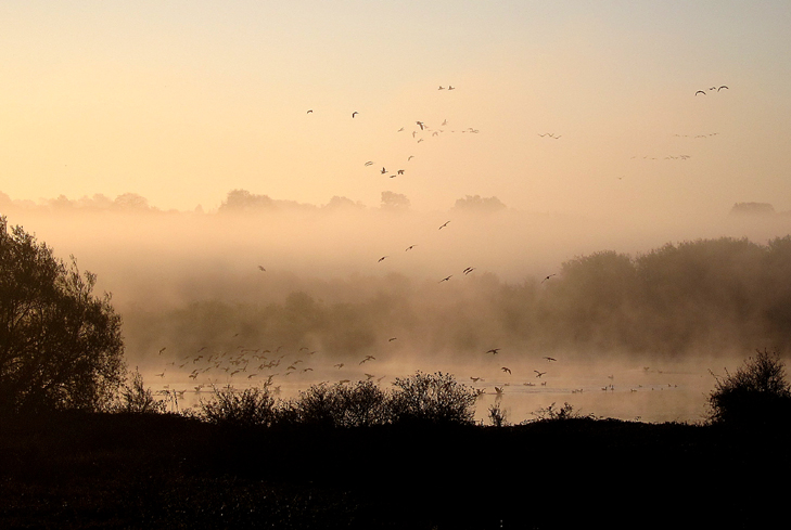 Mist and Geese over Gravel Pits