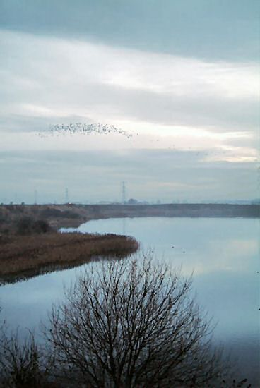 Lapwings over the Deep Pit