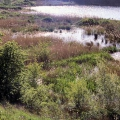 Deep Pit reed beds bank