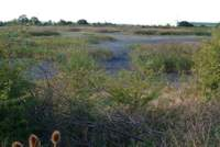 Dry End of Slurry Lagoon